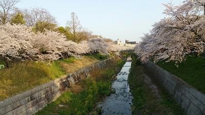 2017yamasaki1.jpg
