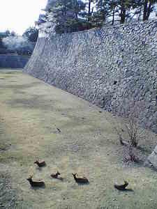 名古屋城のお堀の鹿.jpg