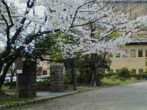 動物園跡門と桜1.jpg