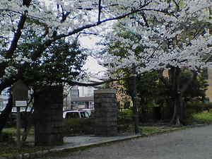 動物園跡門と桜2.jpg